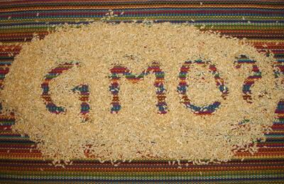 GMO rice