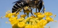 Activists, farmers link GMOs to use of neonic pesticide, claim bees endangered