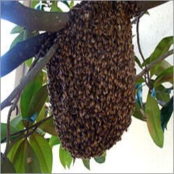 Honey Bee Hive Control