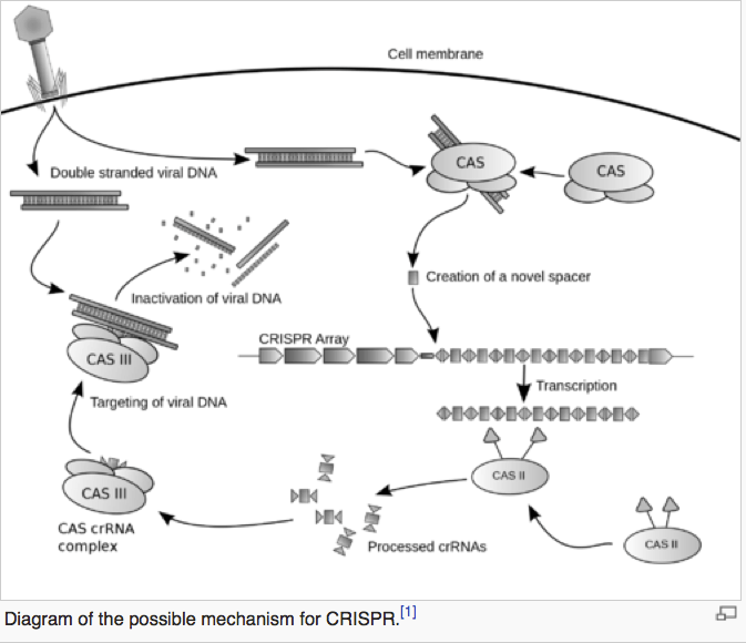 Diagram of CRISPR a technique for gene silencing. (Image: Wikipedia)
