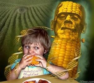 franken corn DNA