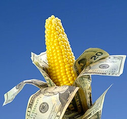 money corn