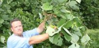 Are GMOs creating disastrous superweed problem?