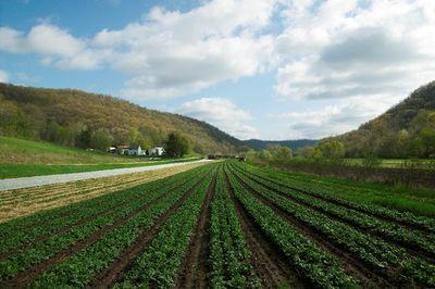 GMO meta-study: Pesticide use down 37%, yields up 22%, profits rise 68%
