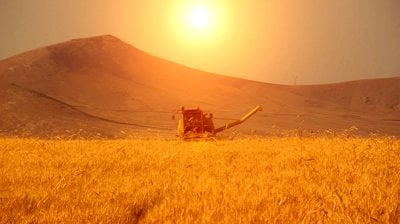 stock footage wheat harvesting sun reflection