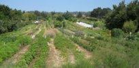 px UCSC farm