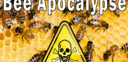 Beegate 3: Conflicts of interest dog European IUCN bee panel as nenonic ban devastates crops