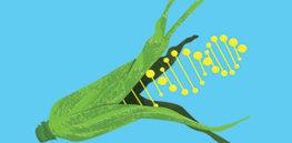 GMOCrops Thumbnail