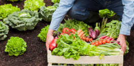 We don't grow enough vegetables to feed everyone a healthy diet, study claims