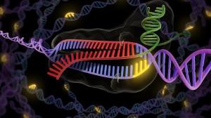 CRISPR x