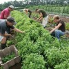 Common-Reasons-Why-Organic-Farming-is-Essential