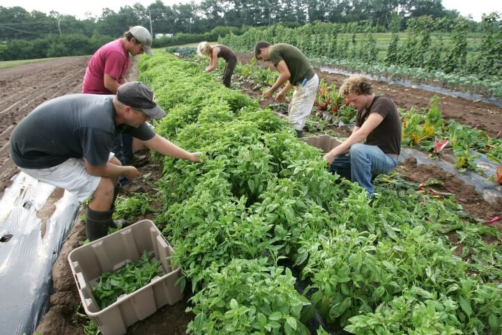 Farmer viewpoint: Organic sector offers unique ...