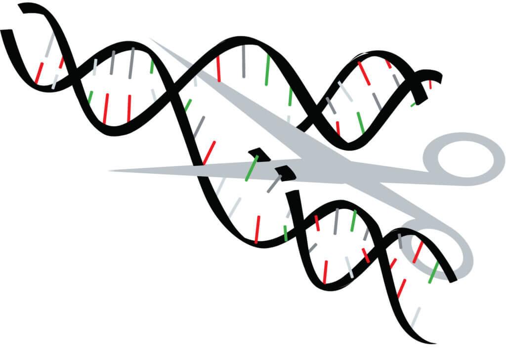 snip DNA