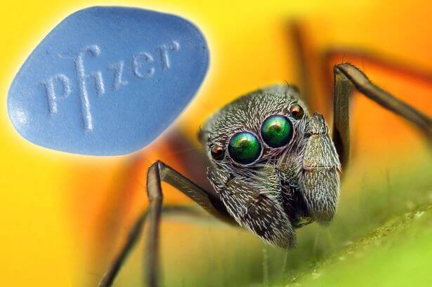MAIN Spider