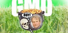 composite GMO scaled