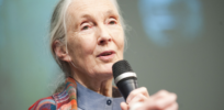 Jane Goodall decries GM proponents as 'anti-science'