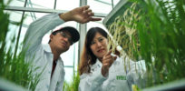 Peak food? Can food tech supercharge crop yields and address global food security?