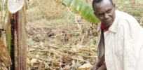 ActionAid in Africa ensnared by its own ugly GMO cancer scare tactics