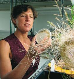 Pamela Ronald at TED: Prejudices of rich denying poor, vulnerable benefits of biotechnology
