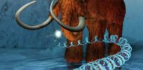 Return of the woolly mammoth and 3 other ways CRISPR could change the world