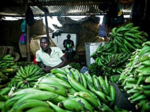 uganda-bananas-afp-getty2