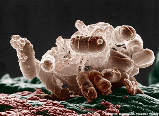 ecolibacteria