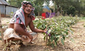 ISIS ran this picture of Gazipur farmer Mojibur Rahmanm, who Ho claims began to get yielding crops, but they then died out.