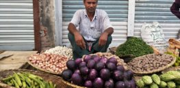 Bt brinjals on the market