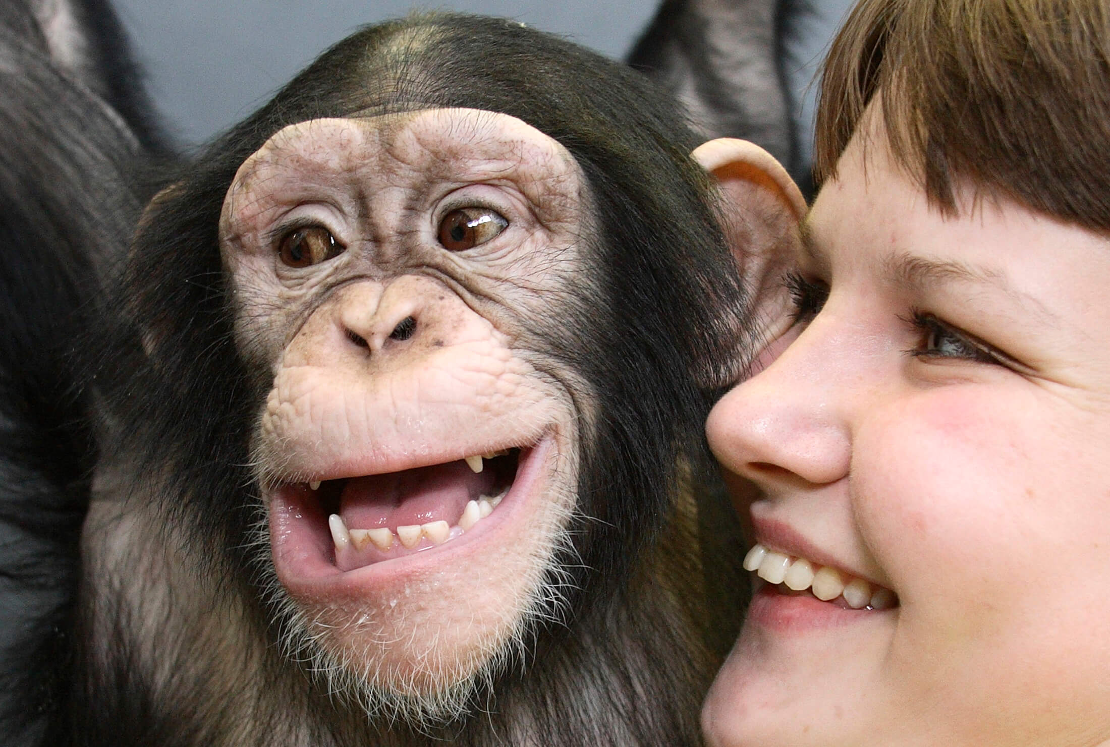 humans and chimps seen as not as similar as once thought genetic