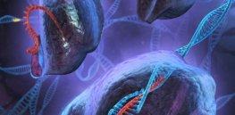 CRISPR DNA e