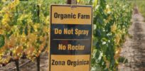 Organic produce has pesticide residues too
