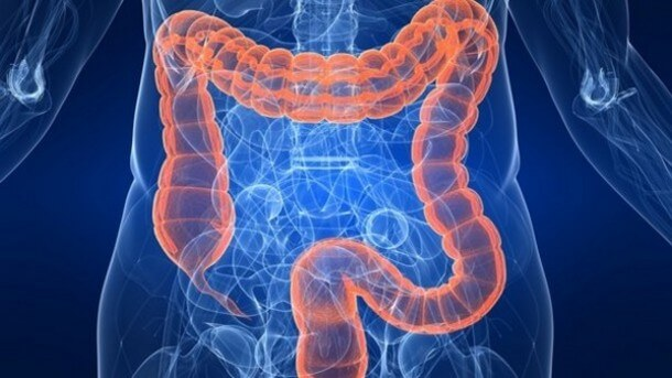 Probiotic potential Altering gut bacteria shows promise for fatty liver disease strict xxl