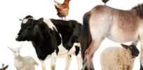 Rules force British organic farmers to use homeopathic remedies on their animals