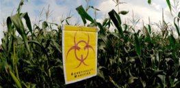 Two decades of GMO crops in the US in infographics and charts