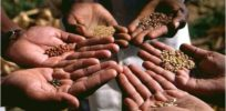 Why seed saving and traditional farming may not be the most sustainable way to farm
