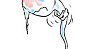 frozen sperm