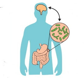 Can Bacteria In Your Gut Explain Your >> How Your Gut Microbiome May Affect Your Brain And Emotions Genetic
