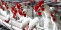 Talking Biotech: GMO opponents block bird flu epidemic solution; Potato biotech