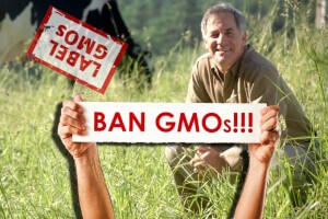 GMO large x