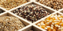 Seed Diversity