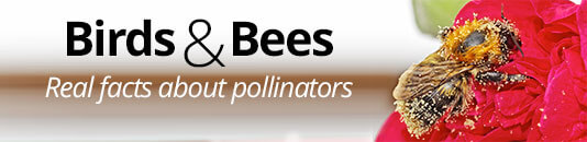 Birds and Bees: Real Facts on Pollinators