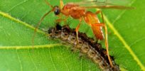 Nature busts anti-GMO myth: Gene swapping among plants, insects common occurence