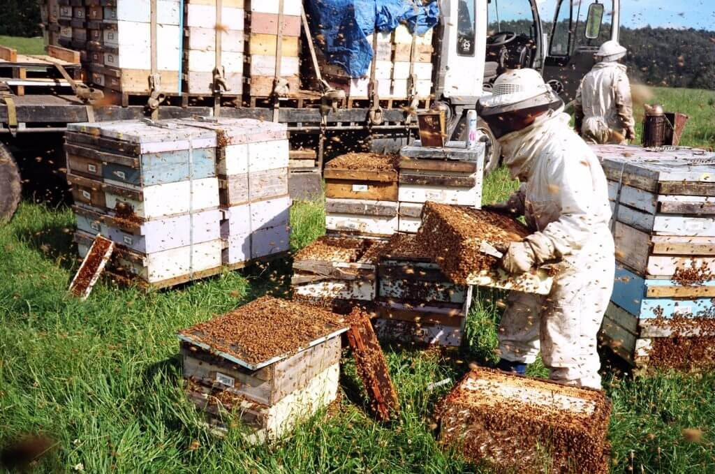 Honey bee rental