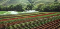 More than half of pesticides used by California farmers are active ingredients approved for organic