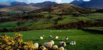 Northern Ireland bans cultivation of GMOs
