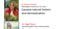 Talking Biotech: Genetic improvements and virus resistance of cassava, African staple