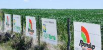 Glyphosate: Real risks, benefits of poster child for GMO debate