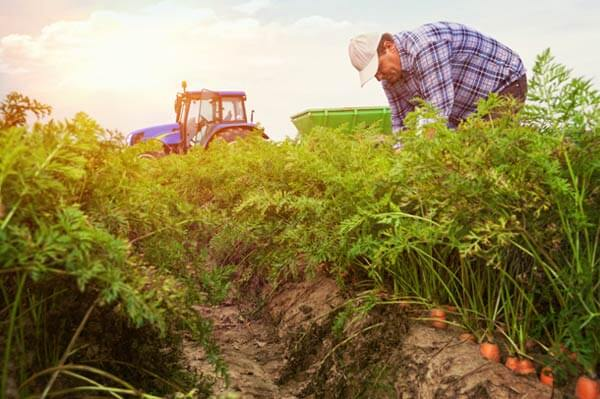 USDA data confirm organic yields significantly lower than with