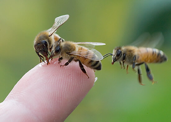 three bees finger