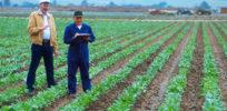 farmers checking crops in a field pv e